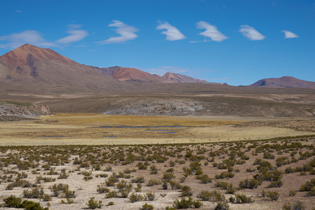 dormant: Large open plain high up in the Altiplano of northern Chile. The area is used by local people for grazing Alpaca and Llama.  In the background is the dormant Taapaca volcano 5860 m. Stock Photo