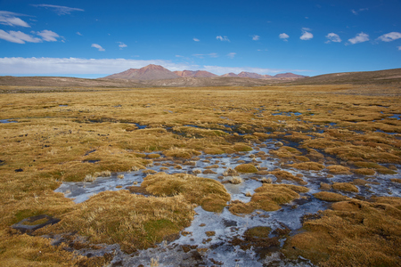 dormant: Wetland area, also known as a bofedal in Spanish, on the Altiplano of northern Chile in Lauca National Park  at the base of the In the background is the dormant Taapaca volcano 5860 m Stock Photo