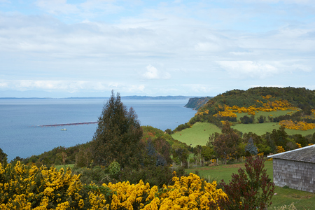 inlet: Lush vegetation and flowering gorse bushes on the hills above a sheltered inlet on the small island of Quinchao in the archipelago of Chiloe in Chile.