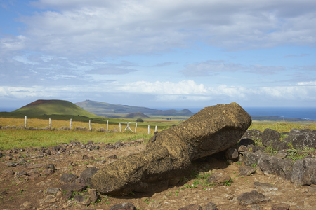 toppled: Toppled Moai statue lying amongst the rolling green pasture of Easter Island.