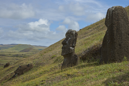 toppled: Rano Raraku. Abandoned and partially buried statues on the slopes of the extinct volcano which was the quarry from which the Moai statues of Rapa Nui (Easter Island) were carved.