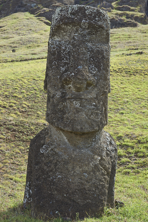 rapa nui: Rano Raraku. Abandoned and partially buried statue on the slopes of the extinct volcano which was the quarry from which the Moai statues of Rapa Nui (Easter Island) were carved. Foto de archivo
