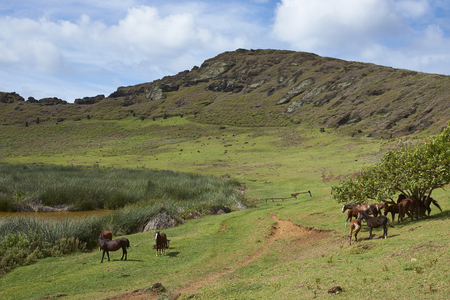 rano raraku: Rano Raraku. Horses grazing around the lake in the crater of the extinct volcano which was the quarry from which the Moai statues of Rapa Nui (Easter Island) were carved.