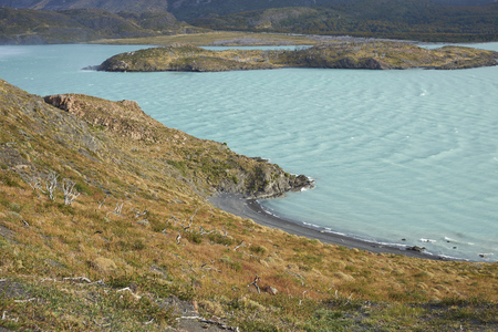 magallanes: Windswept blue waters of Lago Nordenskjold in the wilderness of Torres del Paine National Park in the Magallanes region of Chile