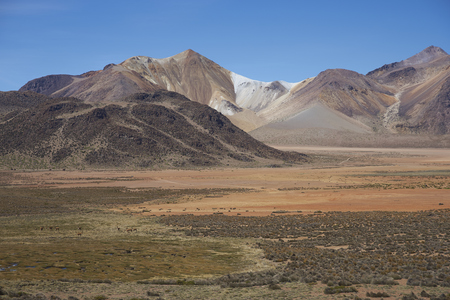 vicuna: Colourful landscape of Suriplaza on the Altiplano of north east Chile close to Lauca National Park. Group of vicuna (Vicugna vicugna) grazing on a wetland in the foreground. Stock Photo