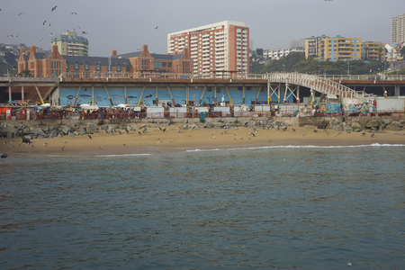 flavescens: VALPARAISO, CHILE - JULY 1, 2016: Fish market in the port city of Valparaiso in Chile. American Sea Lions (Otaria flavescens), gulls and pelicans on the beach hoping to be fed. Editorial