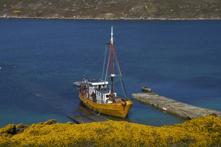 WEST POINT ISLAND, FALKLAND ISLANDS - OCTOBER 23, 2016: Converted trawler tied up on the jetty at the West Point Settlement on West Point Island in the Falkland Islands