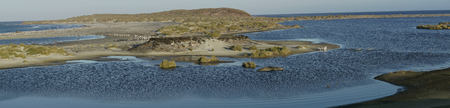 Gentoo Penguins (Pygoscelis papua) crossing a lagoon on the way to their colony after spending the day feeding at sea. Sea Lion Island in the Falkland Islands.