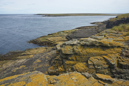 Colourful lichens and plants covering the rocky coastline of Bleaker Island on the Falkland Islands. Stock Photo