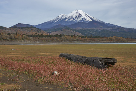 Snow capped peak of Volcano Llaima (3125 meters) in Conguillio National Park in southern Chile. Remains of dead trees on the shore of Lago Conguillio in the foreground. Stock Photo