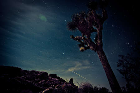 joshua: joshua tree at night Stock Photo