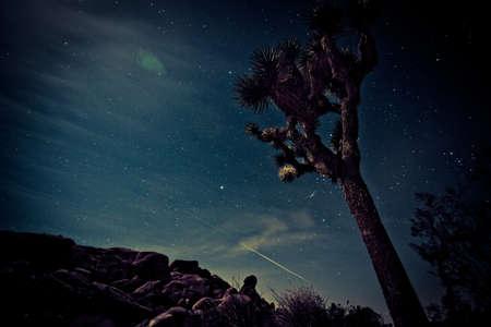 joshua tree at night Stok Fotoğraf