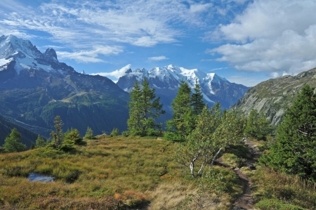 bogs: Mont Blanc and alpine bogs
