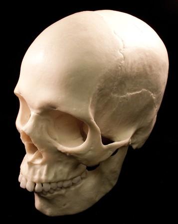 Human skull studio shot with a black background. 版權商用圖片 - 8102437