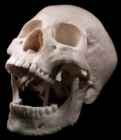Human skull studio shot with a black background.