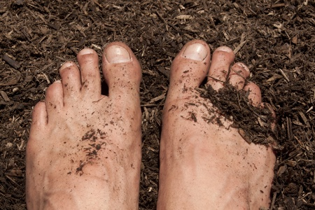 pies sucios: Dirty feet taking a rest in the garden while planting.