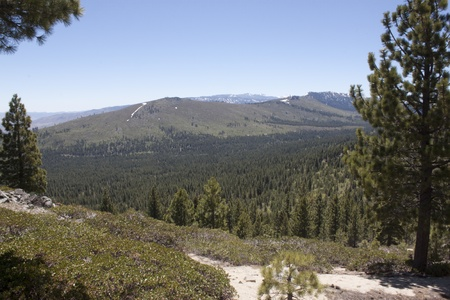 A heavily forest range in the sierra nevadaas.