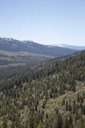 A heavily forest range in the sierra nevadaas. photo