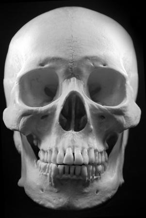 Human skull - bone head dead teeth spooky scary pirate isolated evil Stock Photo - 9895219