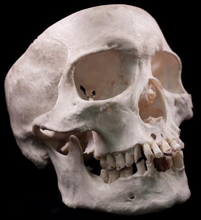 Human skull - bone head dead teeth spooky scary pirate isolated evil
