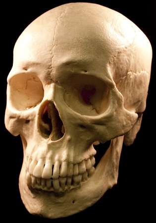 Human skull - bone head dead teeth spooky scary pirate isolated evil 版權商用圖片 - 9895222