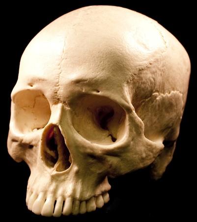 Human skull - bone head dead teeth spooky scary pirate isolated evil photo