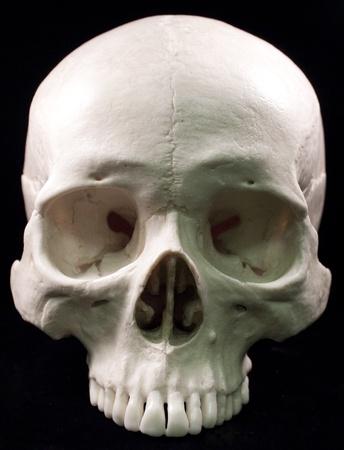 tete de mort: Cr�ne humain - la t�te osseuse des dents mortes sinistre pirate effrayant isol� mal