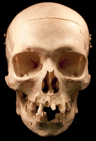 Human skull - bone head dead teeth spooky scary pirate isolated evil Stock Photo - 9895706