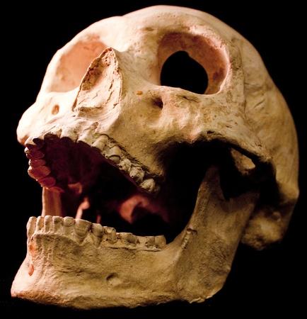 Human skull - bone head dead teeth spooky scary pirate isolated evil 版權商用圖片 - 9895235