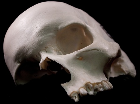 Human skull - bone head dead teeth spooky scary pirate isolated evil Stock Photo - 9895229