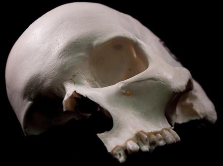 Human skull - bone head dead teeth spooky scary pirate isolated evil 版權商用圖片 - 9895229