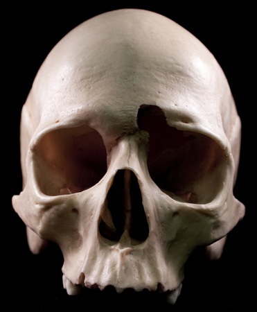 Human skull - bone head dead teeth spooky scary pirate isolated evil