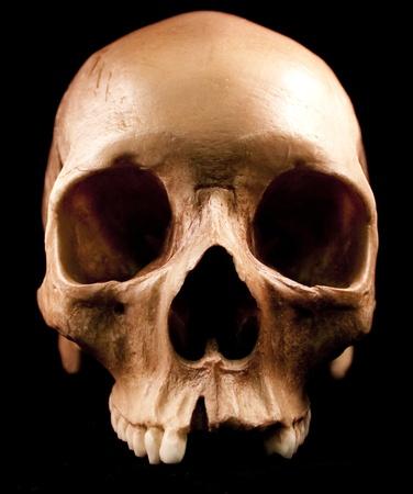 spooky skull: Human skull - bone head dead teeth spooky scary pirate isolated evil