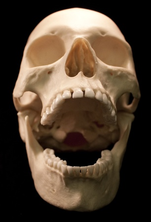 Human skull - bone head dead teeth spooky scary pirate isolated evil Stock Photo - 9895699