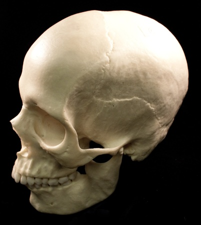 Human skull - bone head dead teeth spooky scary pirate isolated evil photo