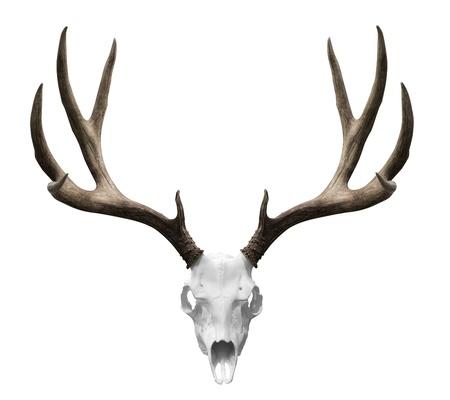 оленьи рога: изолированной череп оленя готовы DRP в ваш дизайн.