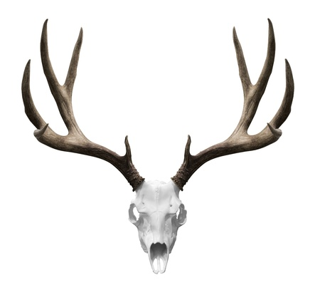 geyik: an isolated deer skull ready to drp into your designs.