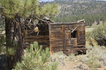 an abandoned western barn in the high sierras Stock Photo - 14570012