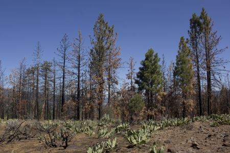 forest fire: despu�s de matem�ticas de un incendio forestal en la sierra alta. Foto de archivo