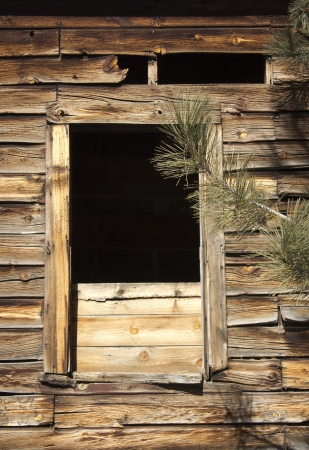 distressed: Old distressed barn wall window with a pine tree