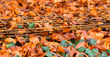 steel cluster used for building wall laying on the fallen autumn leaves photo