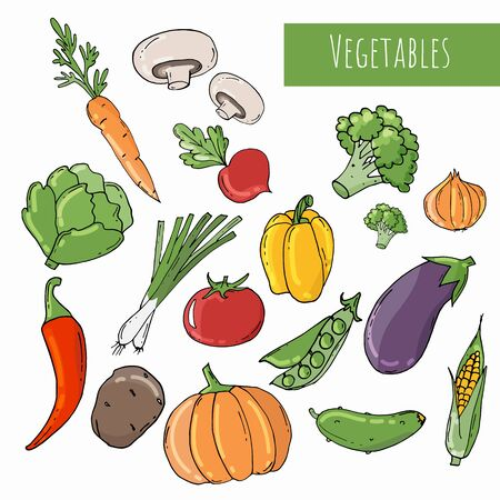 Colored Doodle vegetables isolated on white background. Vector sketch illustration of healthy food.