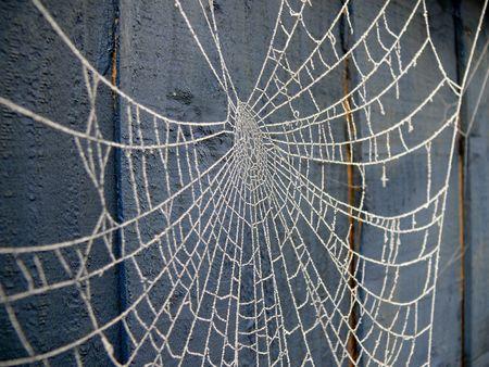 cobweb: Frosty Cobweb Stock Photo