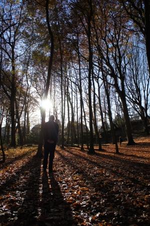 Bos in Nederland