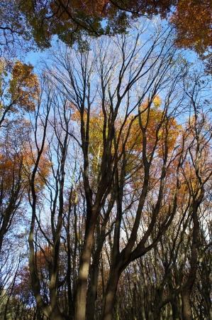 Bold tree Stock Photo