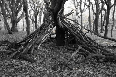 Black and white tree hut