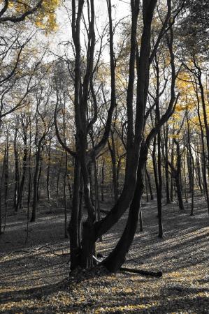 Zwart-witte boom