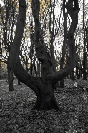 Crazy black and white tree
