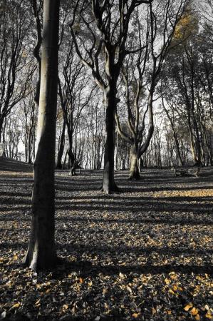 Zwarte en witte bomen