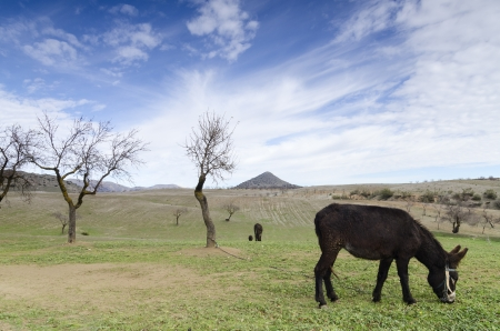 Landscape with donkeys photo